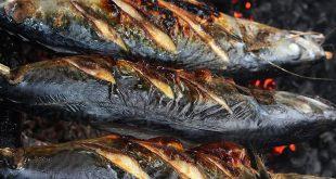 cá trích nướng thạch kim,thơm lừng,làng biển,du lịch hà tĩnh,ăn cá trích nướng,thạch kim,du lịch,hà tĩnh,cá trích,cá trích nướng,#anam,#anam.fun