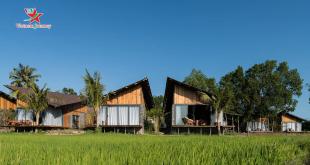 Khám phá resort The Ruộng giản dị nằm giữa đồng ruộng xanh mát