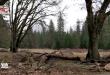 Thiên nhiên hoang sơ cánh rừng Sequoia khổng lồ có tuổi thọ lâu đời